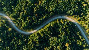 Keste | windy road through forest